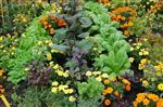 Flower Vegeable Garden Plants