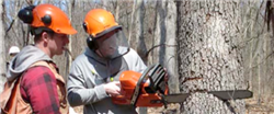 Learn the skill of safe chainsaw operation.